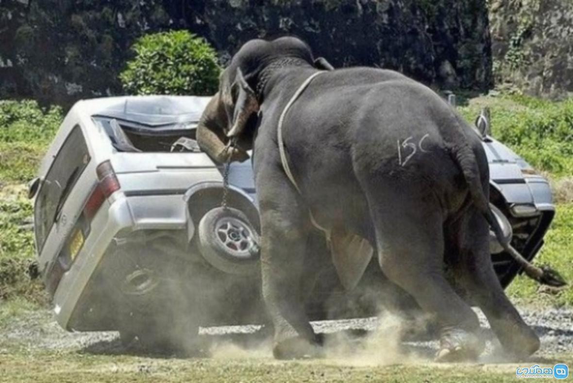 حمله فیل به دو گردشگر ایرانی در پوکت تایلند !!