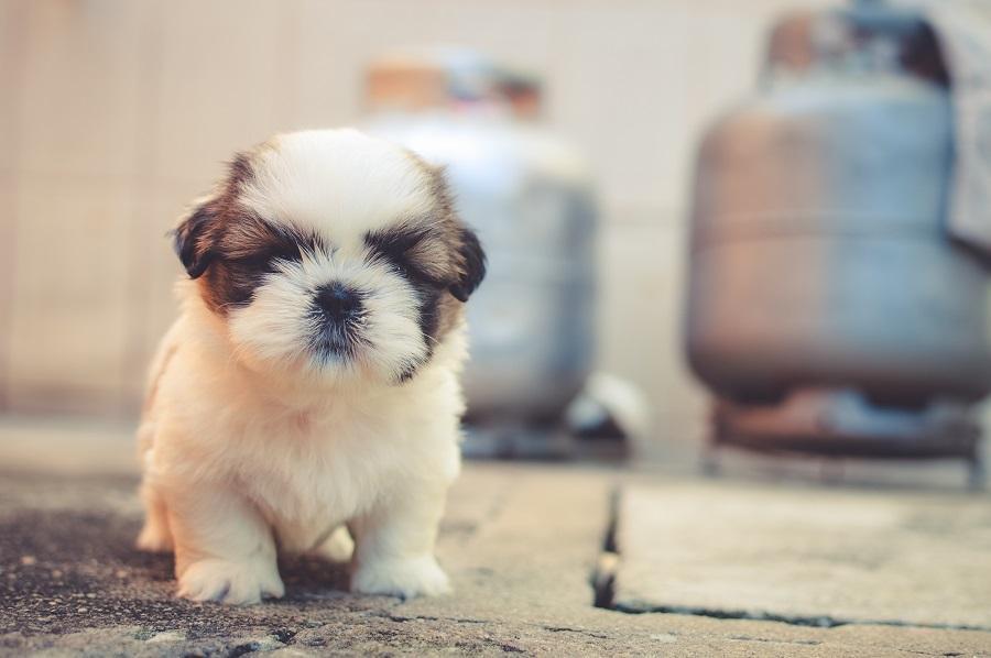 راهنمای انتخاب و مراقبت از سگ های خانگی