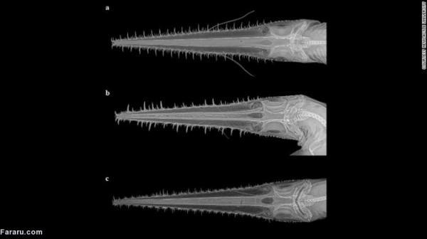 تور هند ارزان: کشف دو گونه نو کوسه در اقیانوس هند غربی